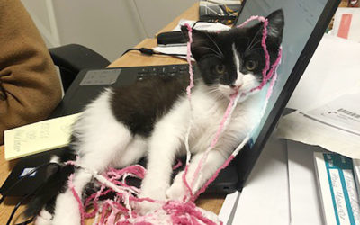 Bromley Park Care Home welcomes kitten Jlo